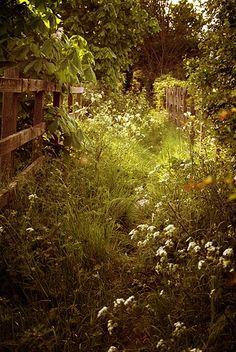 1 A witchwoman's garden