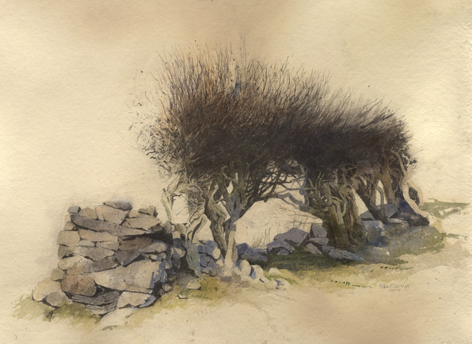 1395334251-Line-of-Hawthorns rob piercy